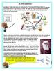 EVOLUTION Interactive Notebook