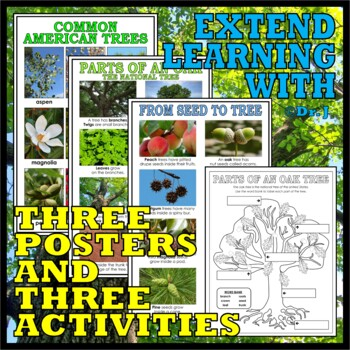 EXPLORING LEAVES, SEEDS, AND TREES (The Forest Biome)