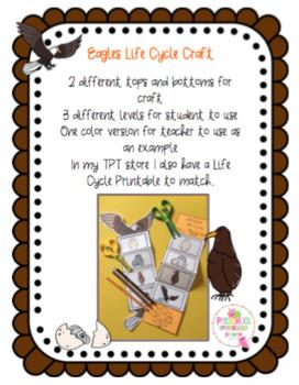 Eagle Life Cycle Craft