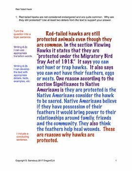 Eagle vs. Red-Tailed Hawk Compare and Contrast and Short Answer Questions