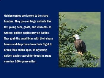 Eagles Activity