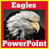 Bald Eagle | American Symbols | PowerPoint Activity | 1st