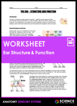 Ear Anatomy - Structure and Function (Hearing)