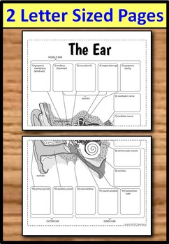Ear foldable big foldable for interactive notebooks or binders ccuart Choice Image