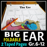 Ear Foldable - Big Foldable for Interactive Notebooks or Binders