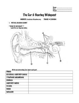 Ear & Hearing Webquest
