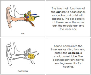 Ear Nomenclature Book
