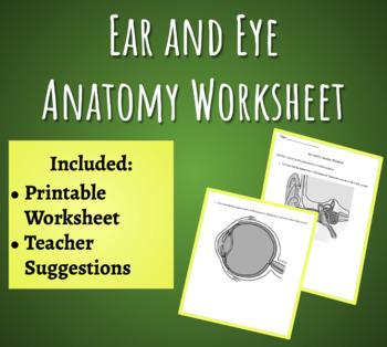 Ear and Eye Anatomy