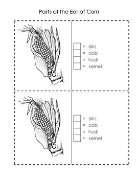 Ear of Corn Science Booklet