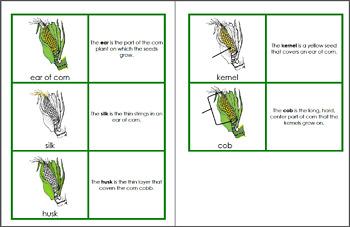 Ear of Corn Science Pack