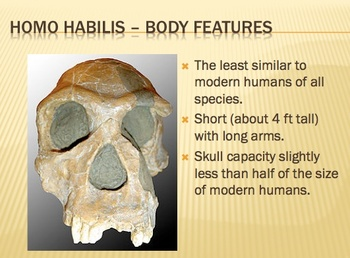 Early Humans (Hominids) Package