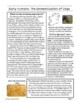 Early Humans and the Domestication of Dogs Informational Text, Activities