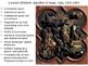 Early Italian Renaissance- 15th century (chapter 21) Powerpoint