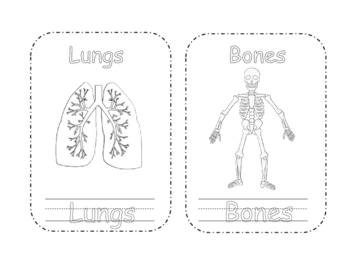 Early Level Human Body Mini Book