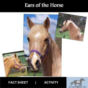 Ears of the Horse Activity