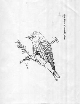 Earth Day - Bird Types