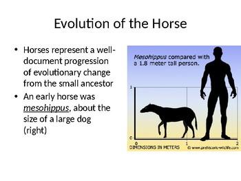 Earth History Teaching Slides: Cenozoic