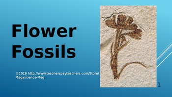 Earth Science Fossil Flowers