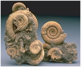 Earth Science Quiz 7 - Fossils & Geologic Time