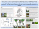 Forests - Earth Science and Geography - Unit 11