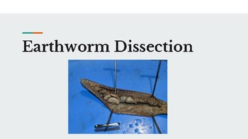 Earthworm annelida dissection presentation and anatomy quiz by earthworm annelida dissection presentation and anatomy quiz ccuart Images