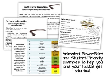 Earthworm Paper Dissection - Scienstructable 3D Dissection Model