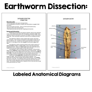 Basic Biology: Earthworm Dissection Lab Activity