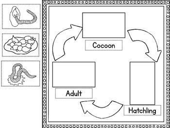 Earthworm Life Cycle