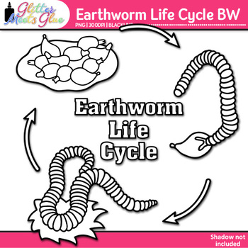 Earthworm Life Cycle Clip Art   Insects for Animal Groups & Classification   B&W
