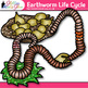 Earthworm Life Cycle Clip Art {Great for Animal Groups, Insect, & Bug Resources}