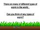 Earthworm Powerpoint