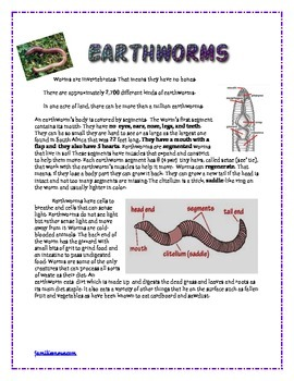 Earthworms 4 page science worksheet