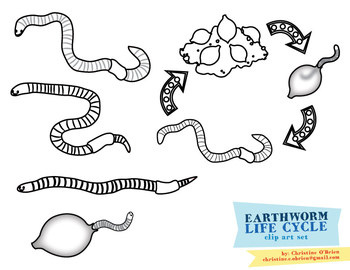 Earthworms Clip Art Set (with Life Cycle)