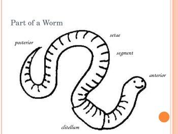 Earthworms Powerpoint