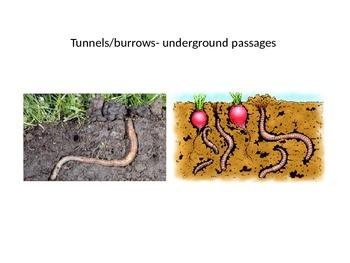 Earthworms Vocab