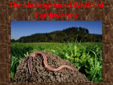 Earthworms! (lots of animations...almost 100%)