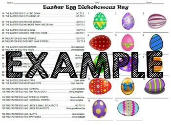 Easter Egg Dichotomous Key