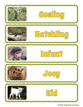 Free Easter Resource: Adorable Baby Animal Word Wall