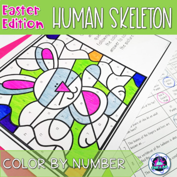 Easter Themed Science Color-by-Number: Human Skeleton