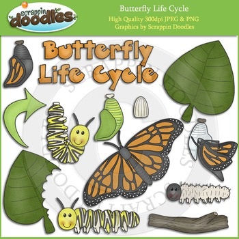 Butterfly Life Cycle Clip