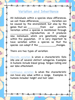 Easter themed Genetics and Variation workbook