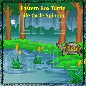 Eastern Box Turtle (Life Cycle Spinner)
