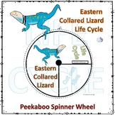 Eastern Collared Lizard (Life Cycle Spinner)
