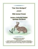 Wild Animal Friends  Eastern Cottontail Rabbit