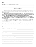 Easy Ancient Civilizations Review
