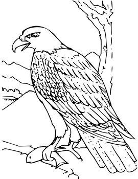 Easy Animal Coloring Pages By Art Rocks Activities Tpt