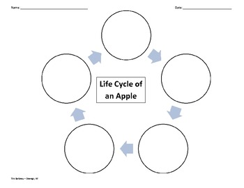 Easy Apple Life Cycle Graphic Organizer
