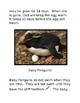 Easy Penguin Facts Reading Passages