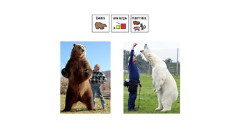 Easy Reader Nonfiction- Bears