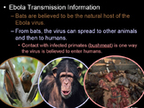 Ebola Virus PowerPoint